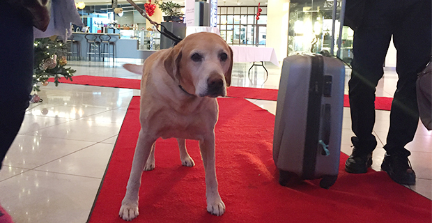 A Happy dog checkar in på Clarion Hotel Arlanda Airport.