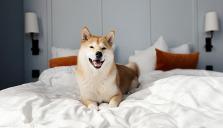Rekordmånga husdjur på hotell i sommar