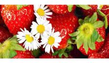 Sparsamt med svenska jordgubbar till midsommar